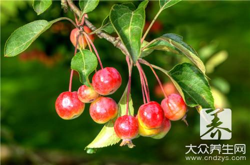 海棠结的果子可以吃吗