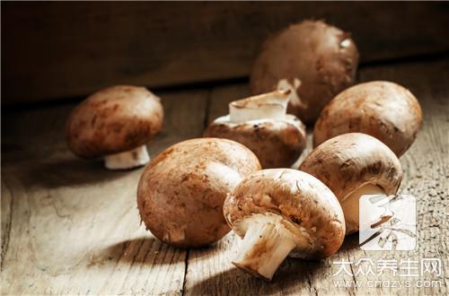小鸡炖磨菇的做法是什么?