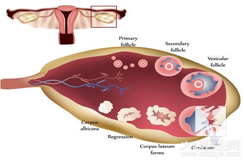 助排卵的药有哪些?-第1张