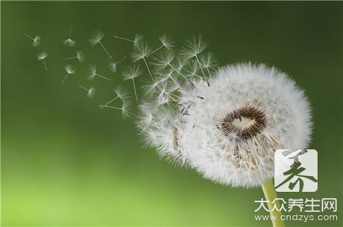 蒲公英菊花枸杞