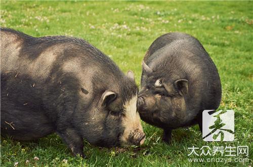 黄豆炖猪肚-第2张