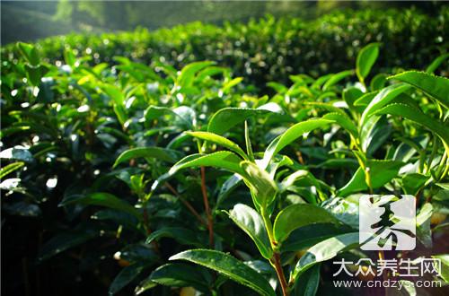 干吃茶叶有什么好处