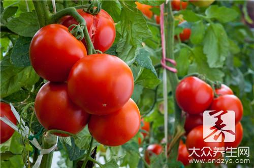 西红柿炒黄瓜可以吃吗