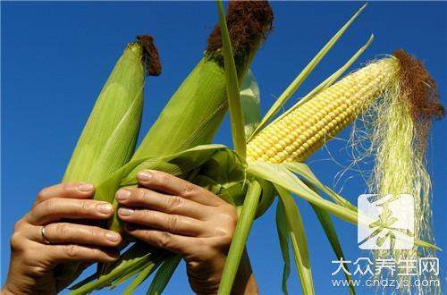 对玉米须过敏是什么病