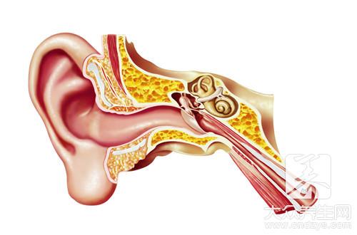 耳后淋巴结在哪