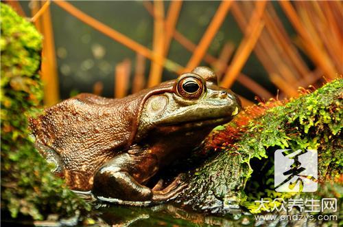 林蛙和雪蛤的区别是什么?