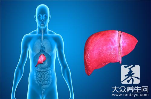 脂肪肝的中医调补