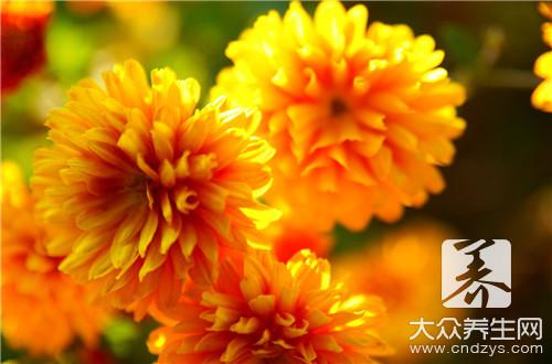映山红花有什么作用