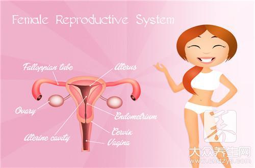 排卵期是怎么算的呢?