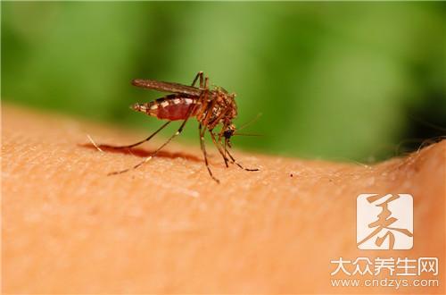 夏天蚊虫叮咬怎么办?