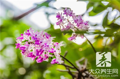 铁皮枫斗能长期吃的吗?