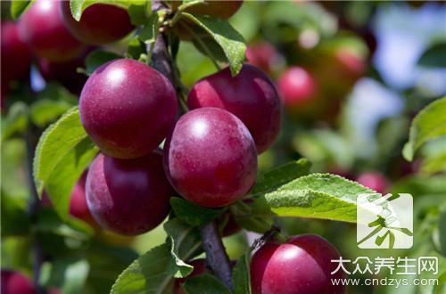 初夏四种水果最养人,你爱吃哪一种-第5张