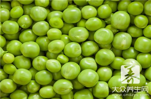 产妇可以吃豌豆吗,注意哪些